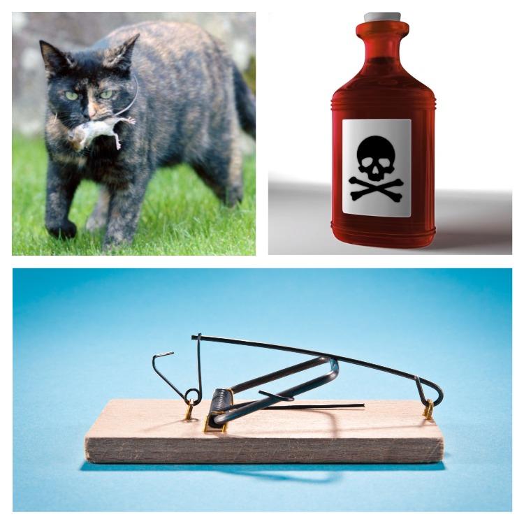 Методы уничтожения мышей