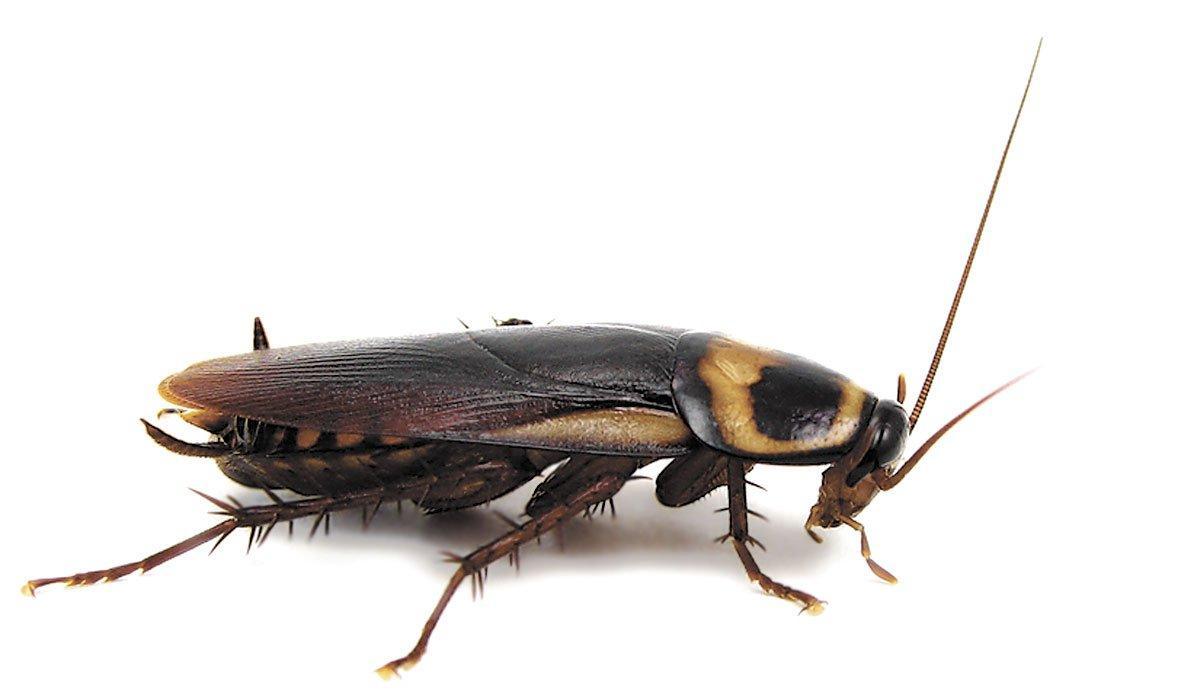 Служба по отравлению тараканов