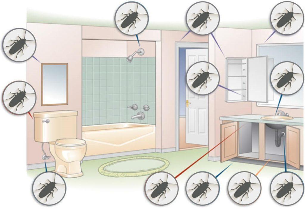 Тараканы в ванной комнате