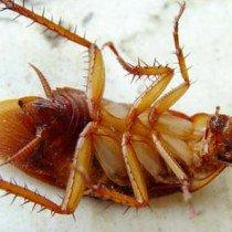 Методы борьбы с тараканами