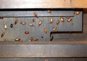 Тараканы за кухонной мебелью