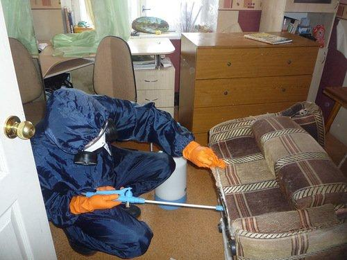 Чем потравить клопов в домашних условиях