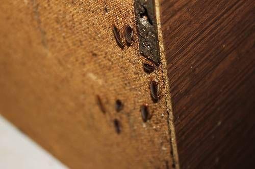 избавления от тараканов в квартире