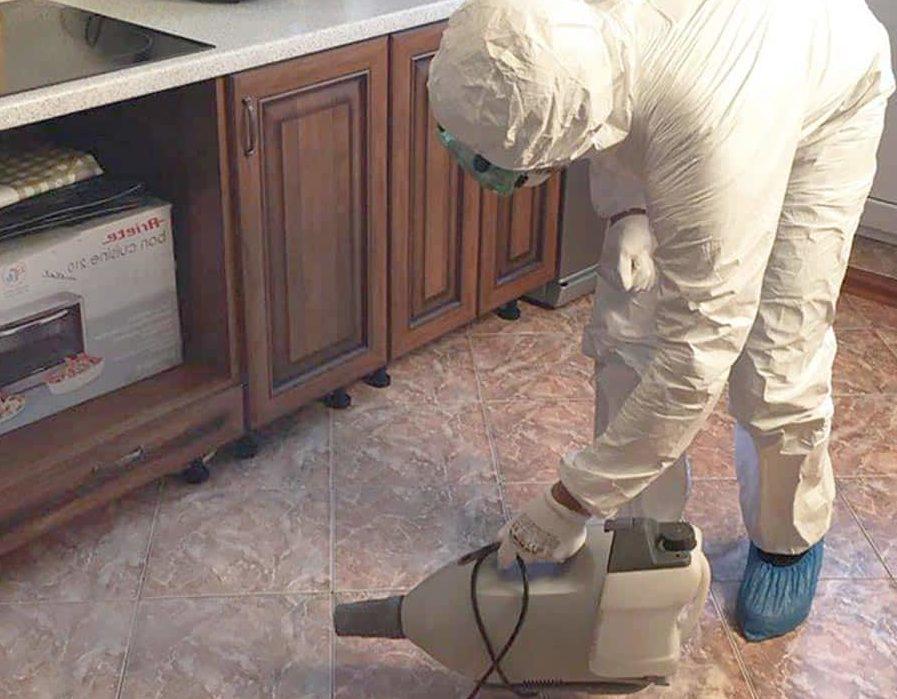 дезинсекция от муравьев в квартире
