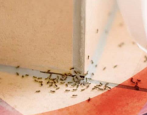 служба уничтожения муравьев в квартире