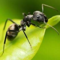 Избавиться от муравьев на грядках