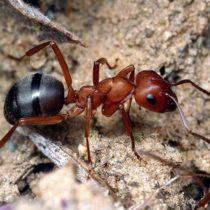 Как избавиться от муравьев в ванной комнате