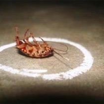 Устройство для уничтожения насекомых