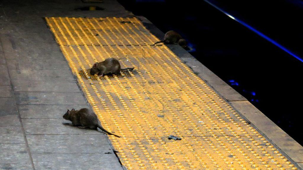 Мыши на предприятии