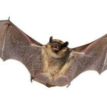Уничтожение летучих мышей, услуги СЭС с гарантией