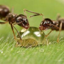 Как избавиться от насекомых раз и навсегда