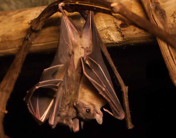 обработка от летучих мышей в доме