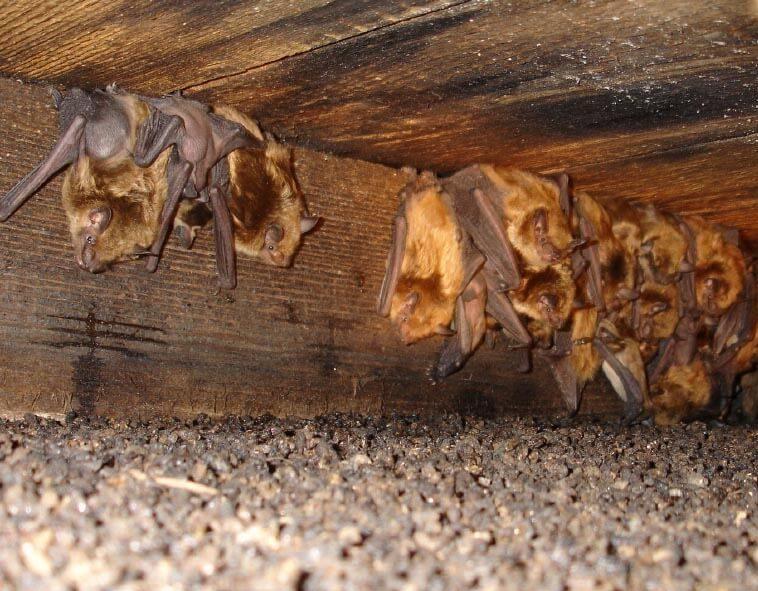 уничтожение летучих мышей