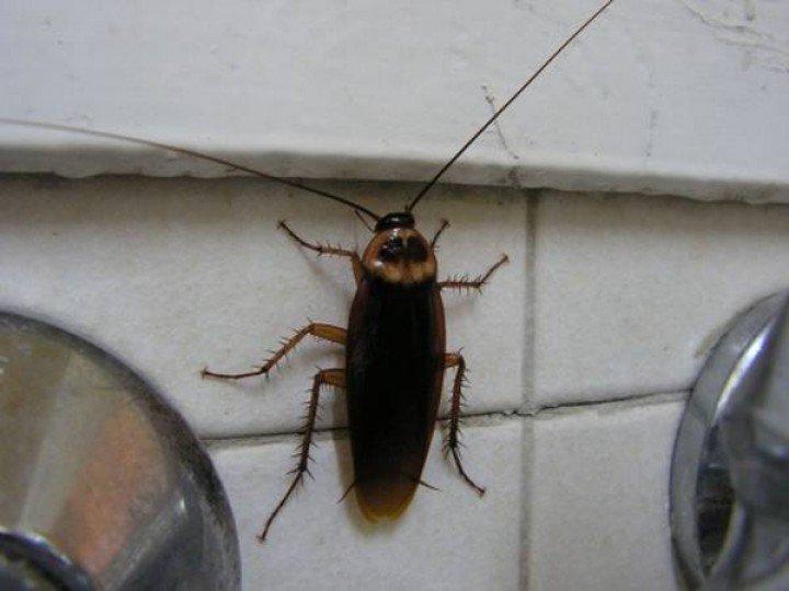 Если от соседей ползут тараканы куда обращаться
